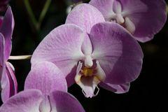 eine Orchidee aus der Biosphäre Potsdam