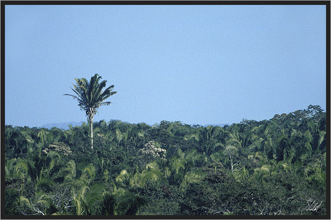 Eine Palme