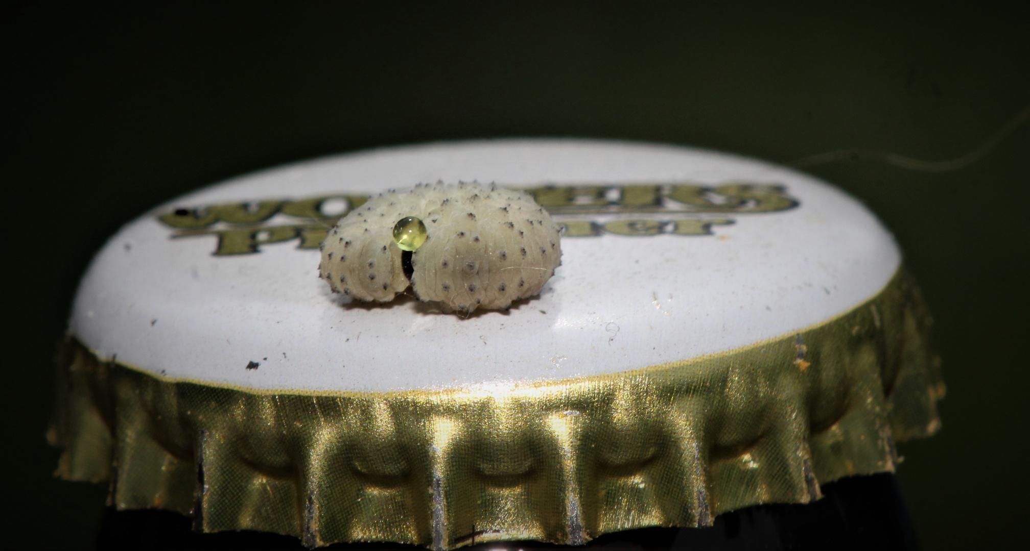 Eine Perle der Natur