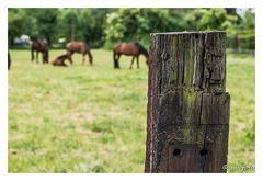 Eine Pferdekoppel mitten im Ruhrgebiet - Zaunpfahl