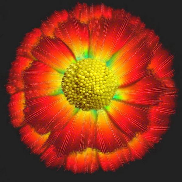 Eine Photoshop-Blume...