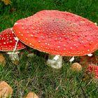 Eine Pilzfamilie