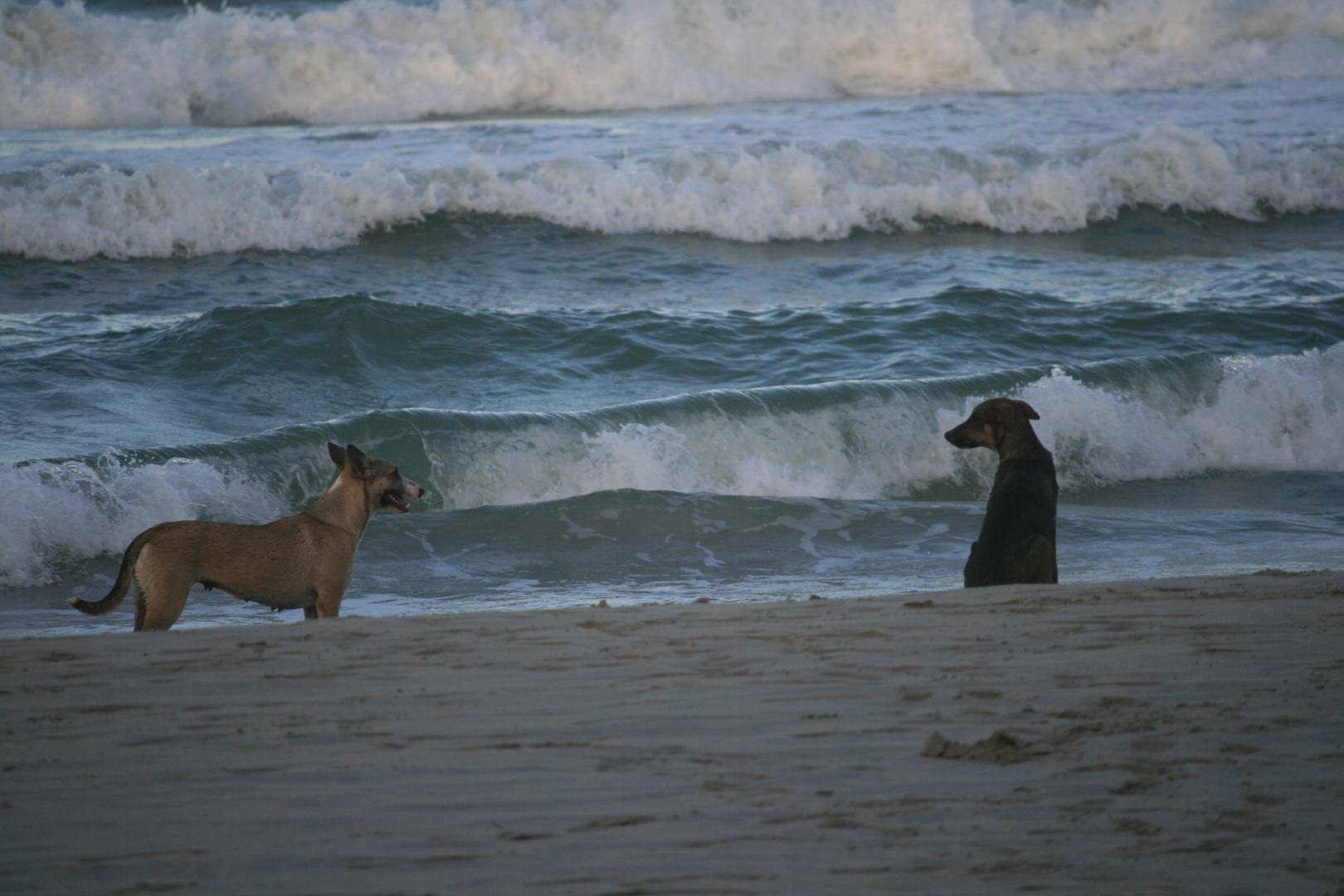 Eine Romanze am Strand