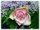 eine Rose .........