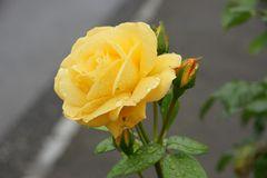 Eine Rose für Dich,
