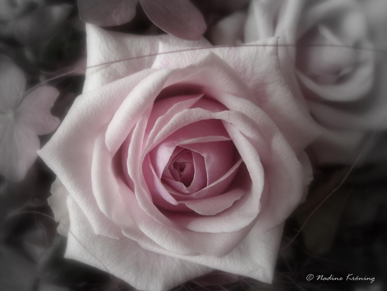 Eine Rose fuer dich...