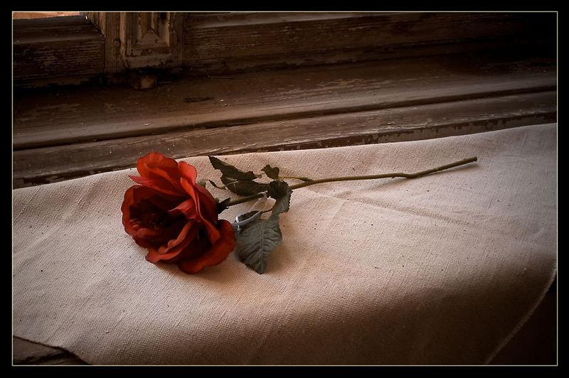 Eine Rose für die Seelen.