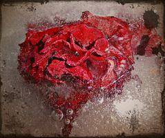 Eine Rose im Winter