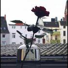 Eine Rose in der Vase