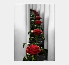 Eine rose ist eine rose ist eine rose .....