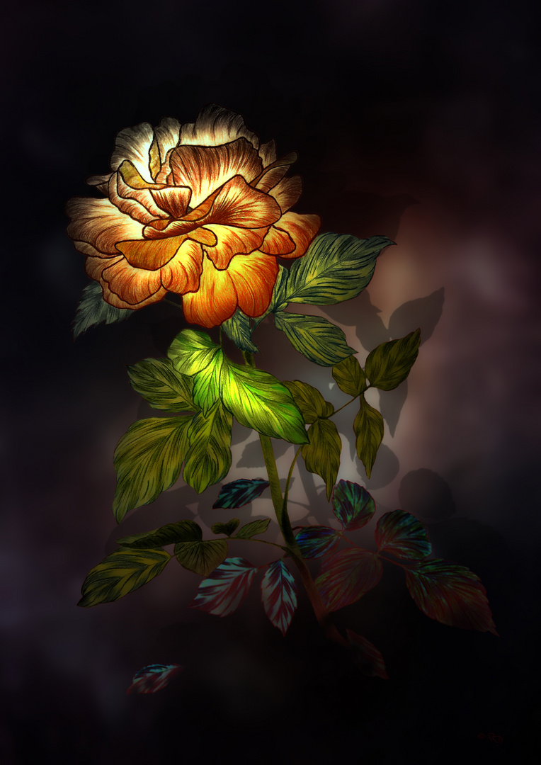 Eine Rose zum Sonntag