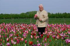 Eine Rose(marie) im Tulpenfeld