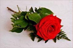 eine Rose.....zum Weltfrauentag,
