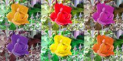 Eine rote Rose - mal anders