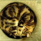 Eine rundum glückliche Katze