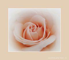 eine Schale später Rosen - Du -