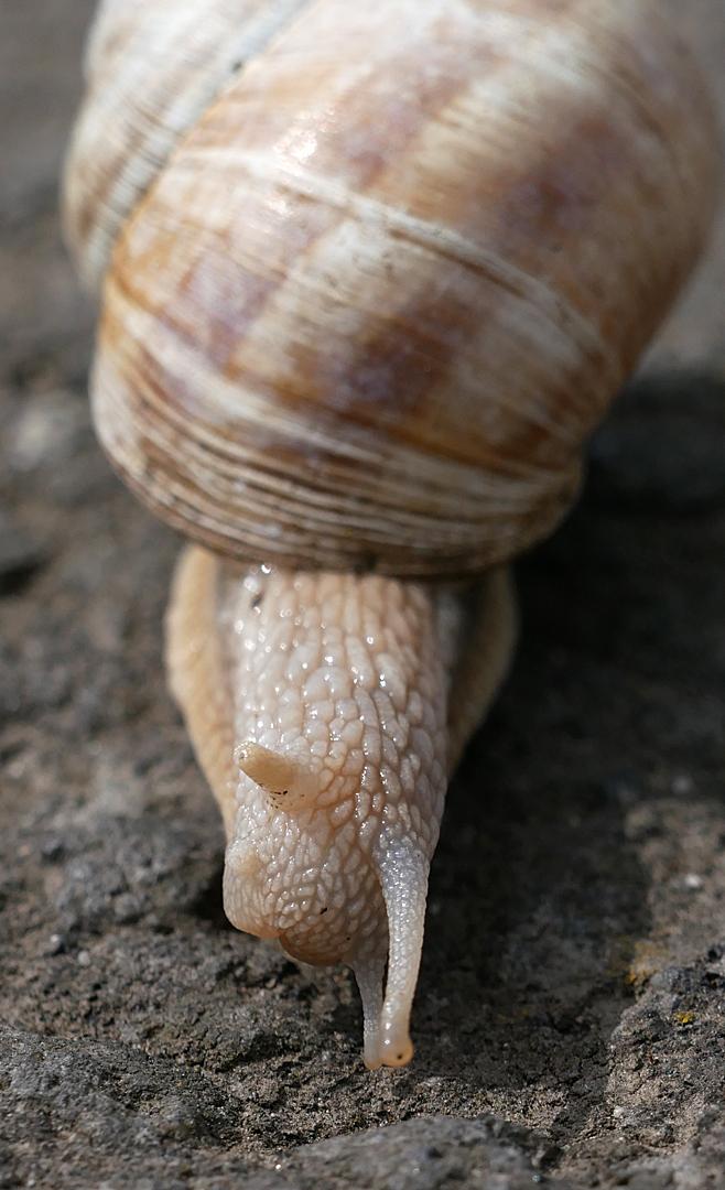 Eine Schnecke