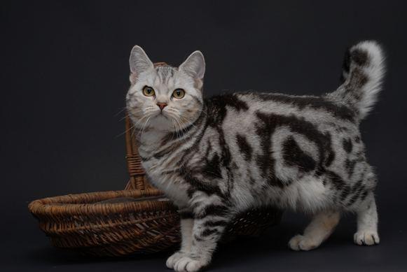 Eine Schöne Katze Foto & Bild