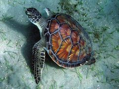 Eine schöne Schildkröte