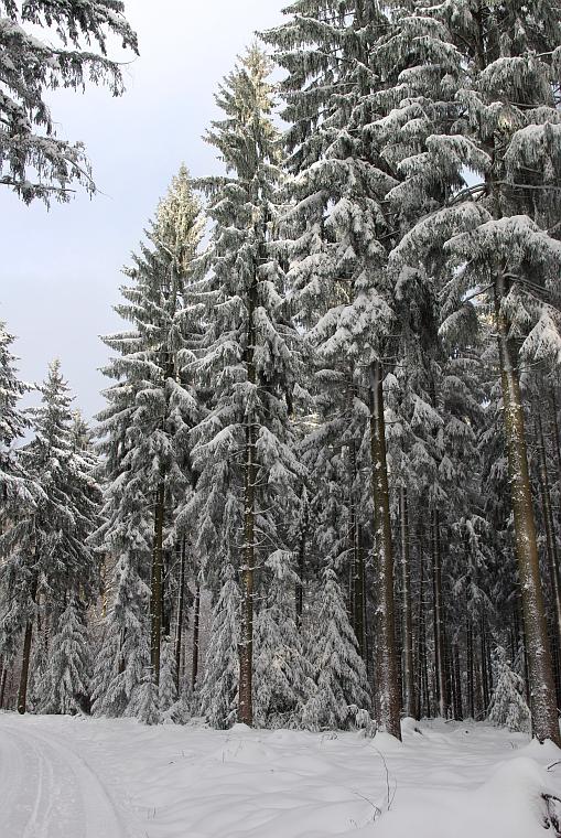 eine sch ne weihnachtszeit foto bild landschaft wald winter im odenwald bilder auf. Black Bedroom Furniture Sets. Home Design Ideas