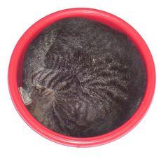 Eine Schüssel voll Katze