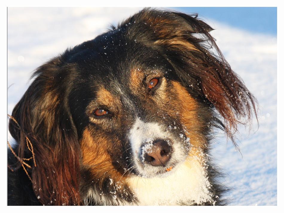 Eine Seele von Hund