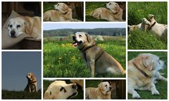 Eine Seele von Hund....