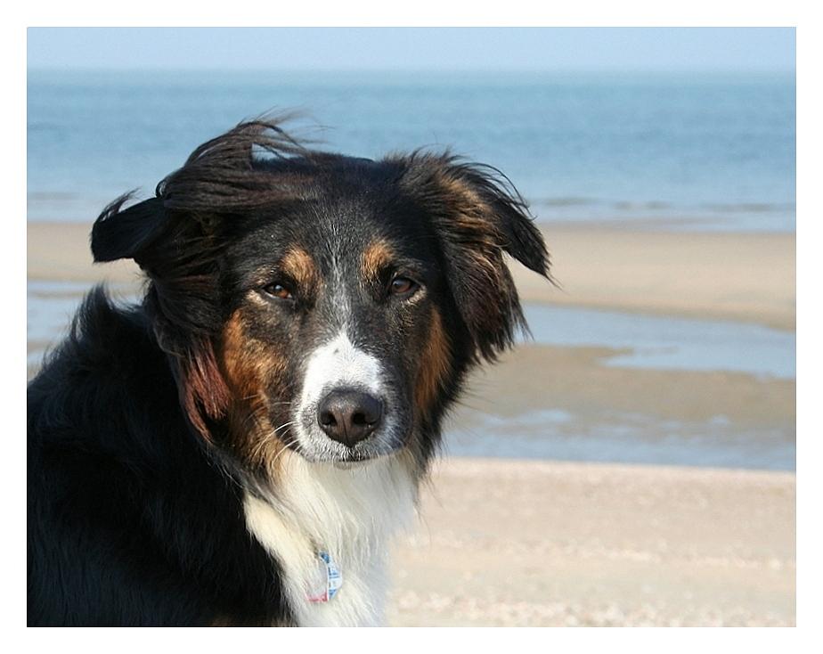 Eine Seele von Hund......