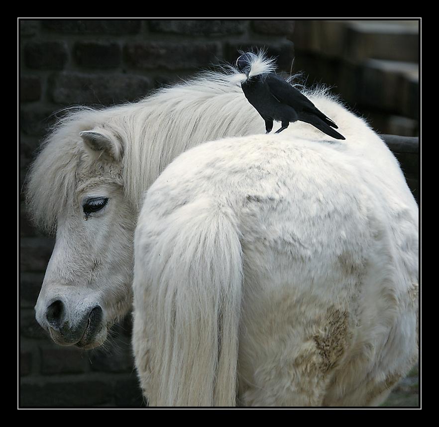 Eine sehr einseitige Tierfreundschaft....