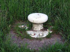 eine sehr seltene Species Pilz,