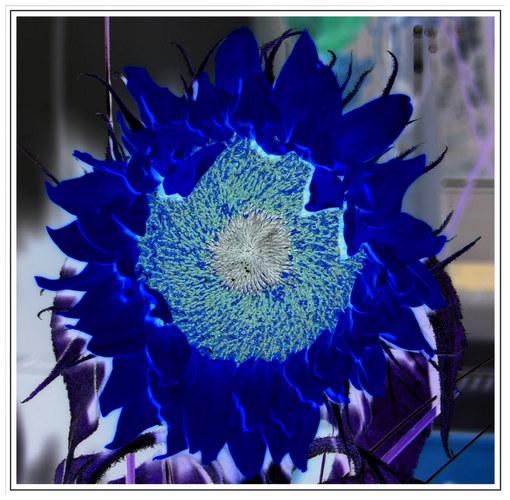 Eine Sonnenblume einmal anders