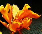 eine Sonntags Blüte am Abend