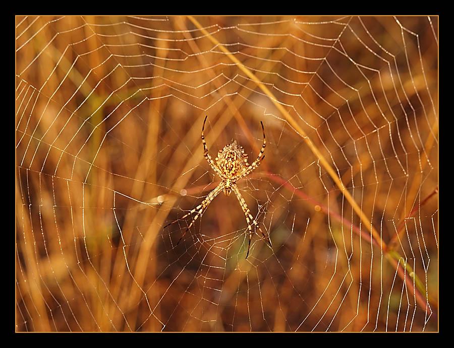 Eine Spinne im Gegenlicht
