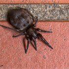 Eine Spinne vor der Haustür
