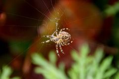 Eine Spinne webt ihr Netz