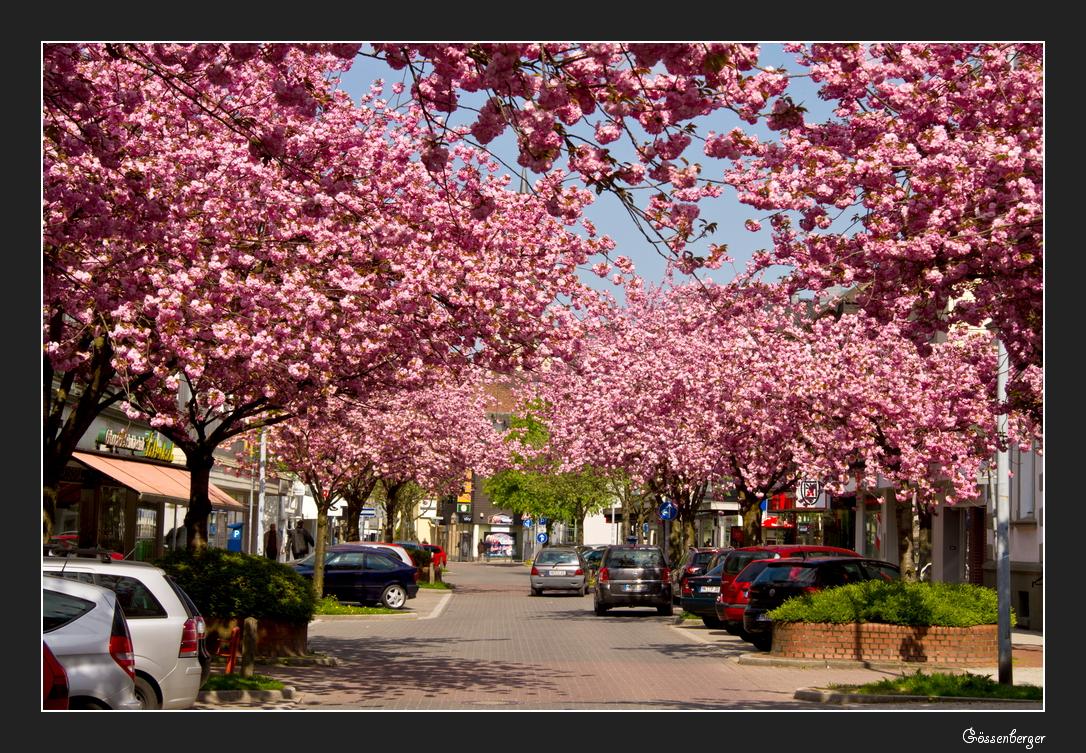 Eine Stadt in Pink #1