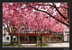 Eine Stadt in Pink #2