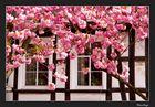Eine Stadt in Pink #4