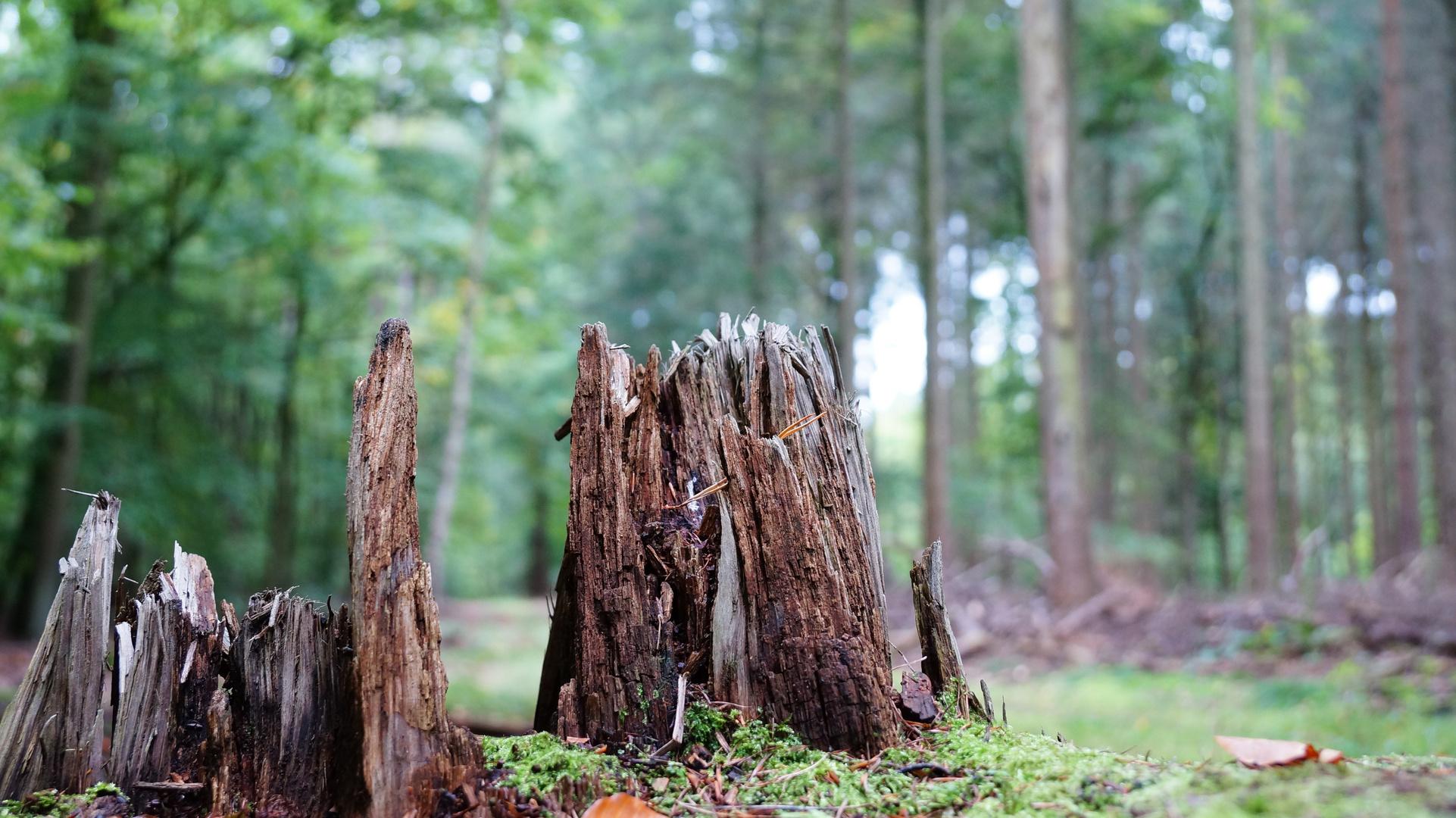 Eine Stolperfalle im Wald?