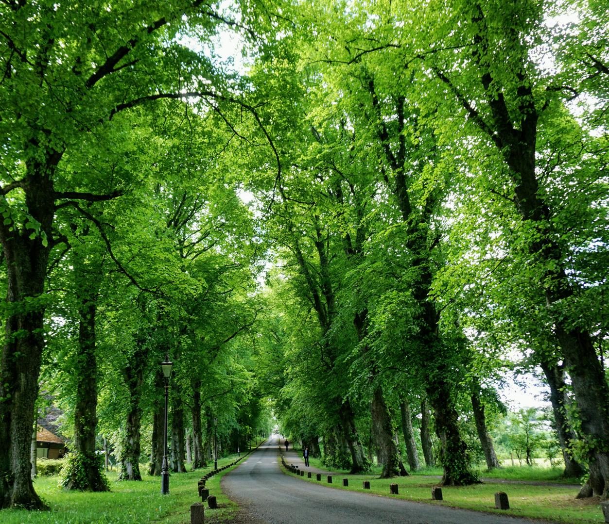 Eine Strasse, viele Bäume