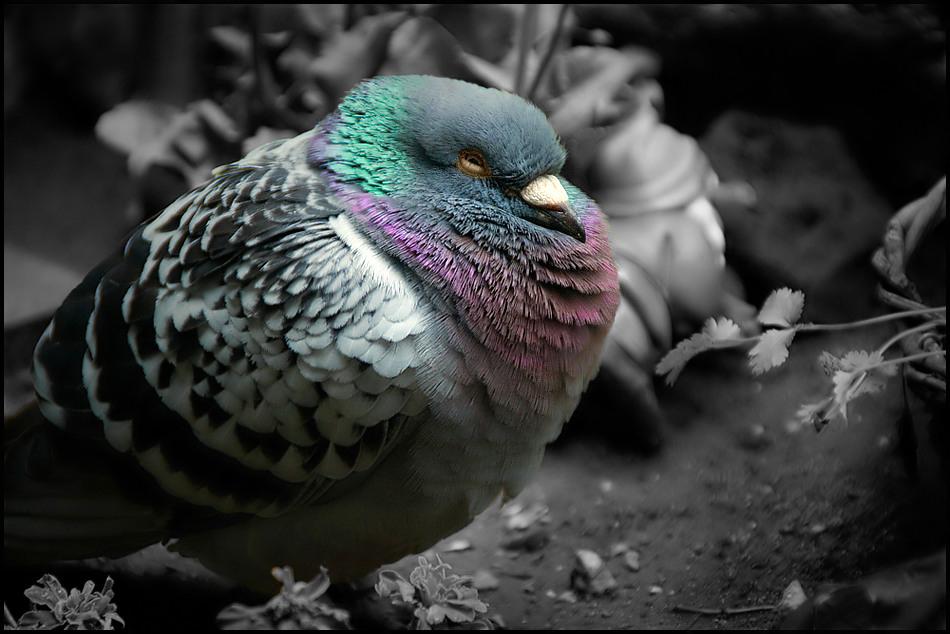 Eine Taube namens Schiller