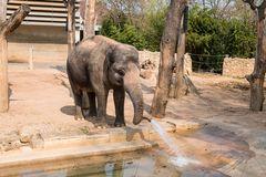 Eine tierische Dusche