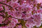 Eine überwältigende Blütenpracht...