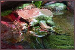 eine ungewöhnliche Schildkröte