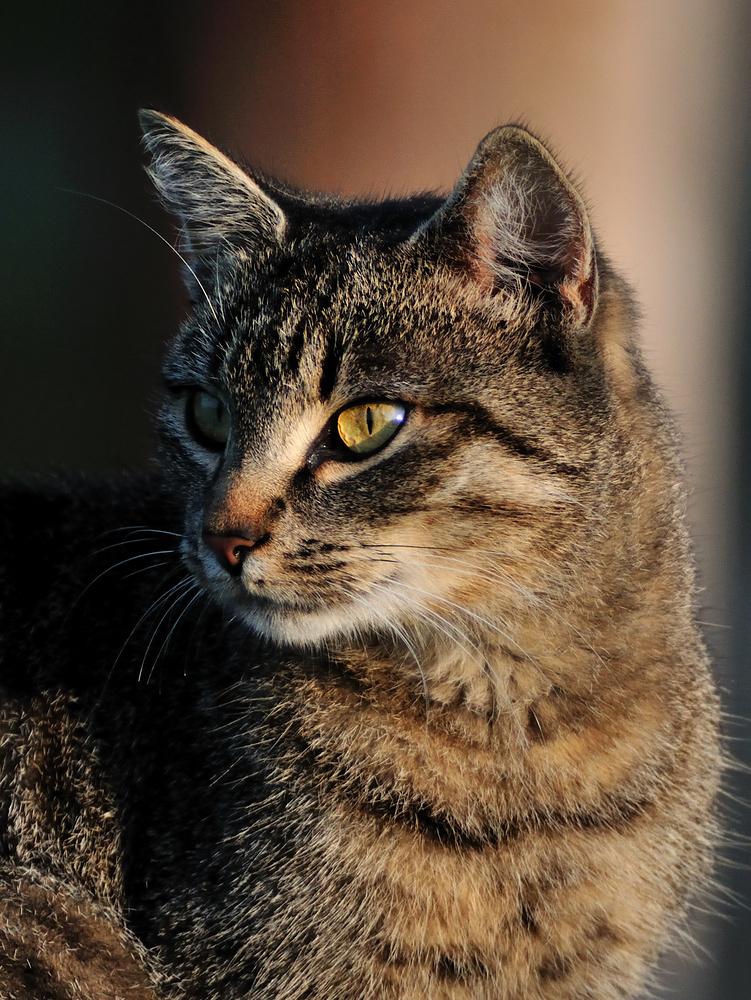 Eine von unseren Katzen