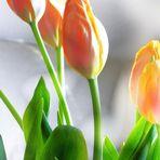 Eine Vorahnung auf den Frühling es soll Morgen und Sonntag 10 Grad geben