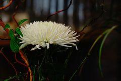 Eine weisse, filigrane Blüte