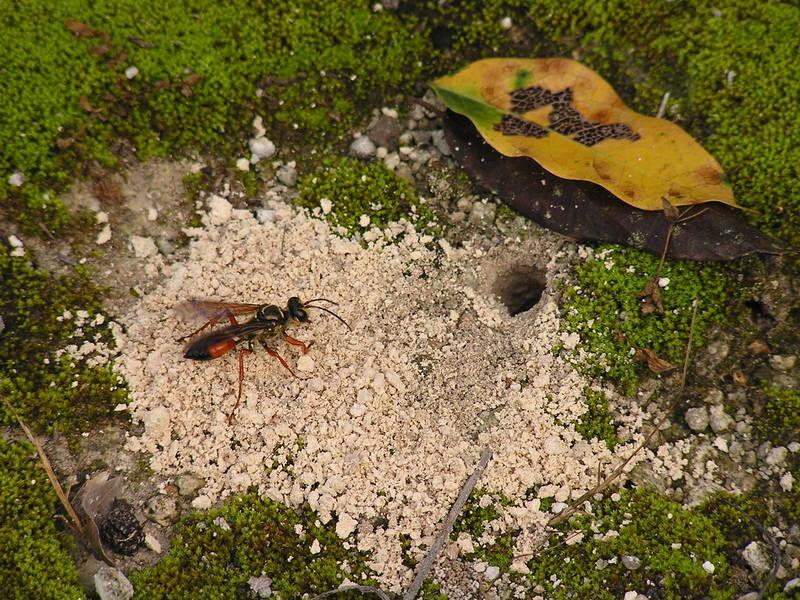 Eine Wespe auf dem Nachhauseweg