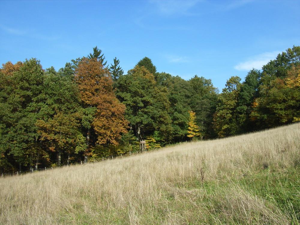 Eine Wiese vor herbstlichem Wald
