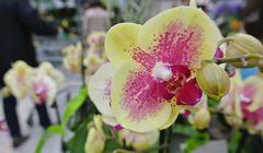 Eine wunderschöne Orchidee